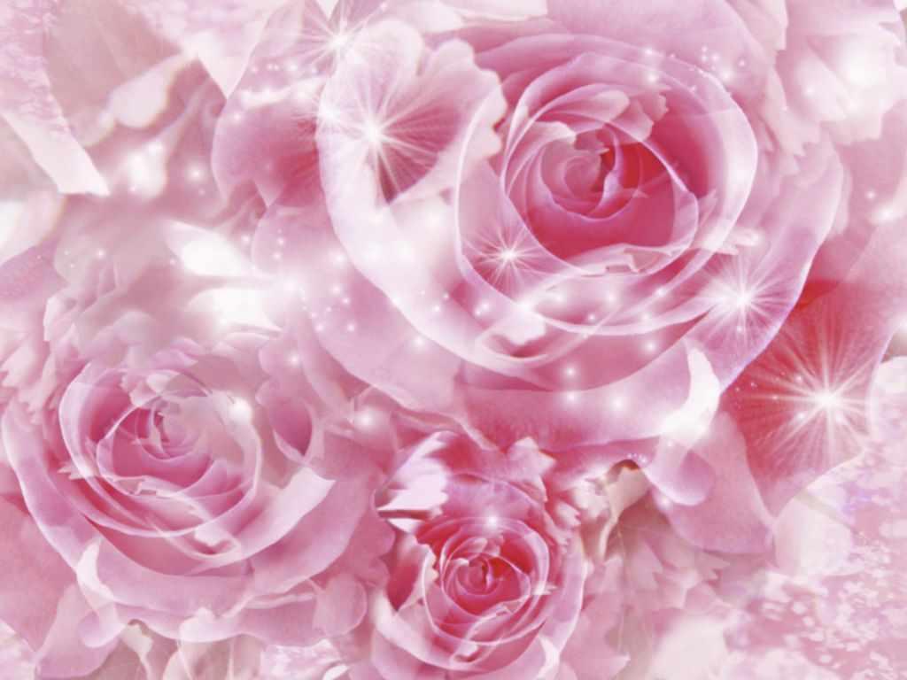 Fondos De Pantalla De Flores Hermosas: ZOOM DISEÑO Y FOTOGRAFIA: Fondos De Pantalla De Flores