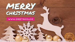 White Christmas deer with wooden background graphic card