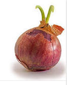 nutritional content of onion