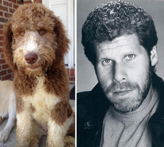 Um cão que parece Ron Perlman