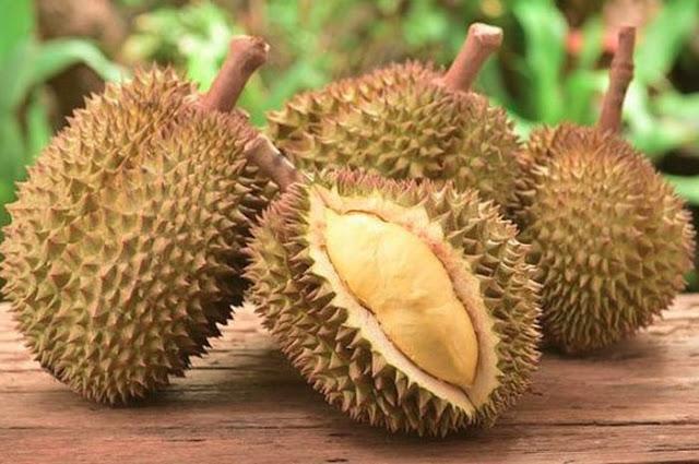 J-Queen – Durian Seharga Motor di Tasikmalaya