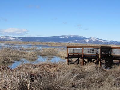 northern california birding hotspots