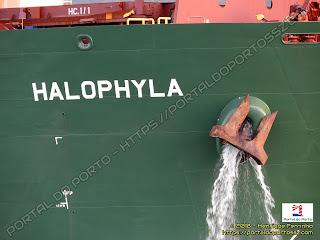Halophyla