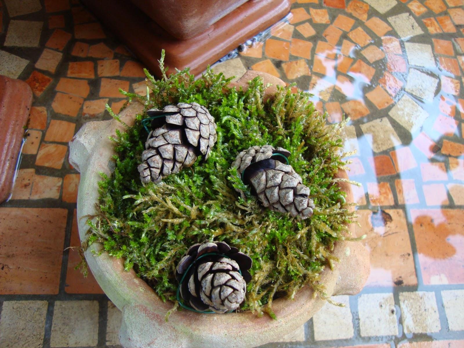 Un piccolo giardino in citt che belle le pigne for I semi della pigna
