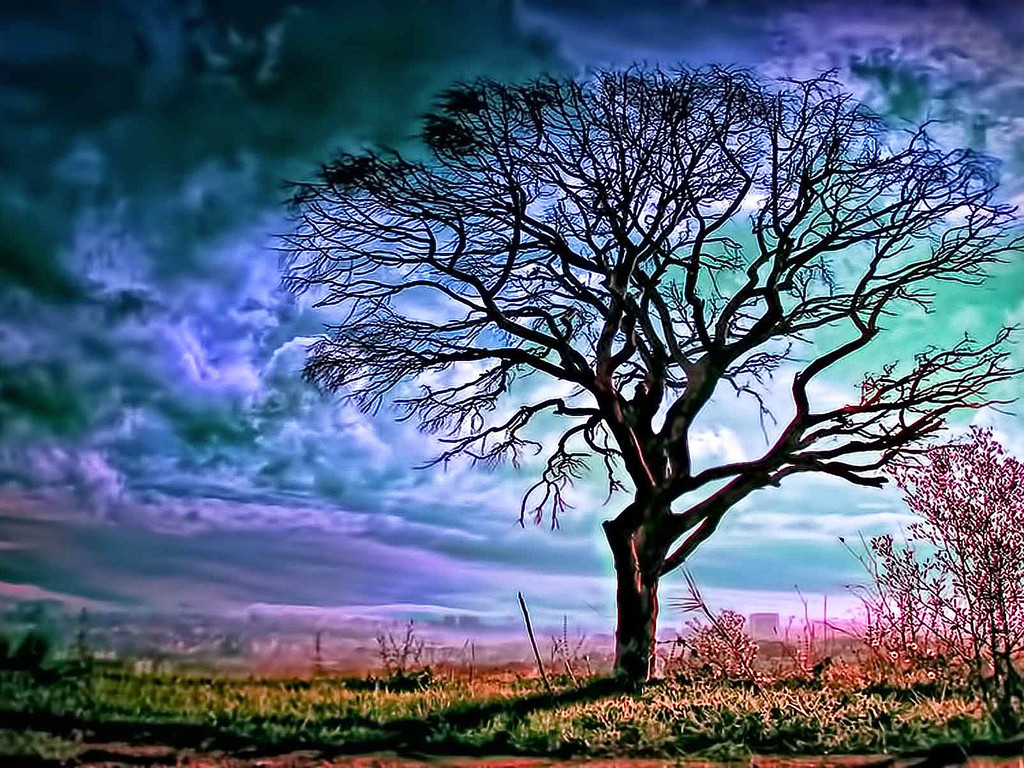 Labels big tree wallpapers hd - Large screen wallpapers free ...