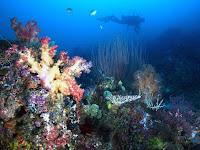10 Taman Bawah Laut Terindah Di Indonesia yang Mendunia