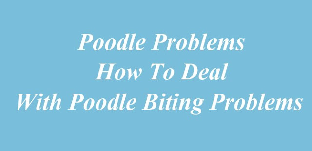 Poodle Problems