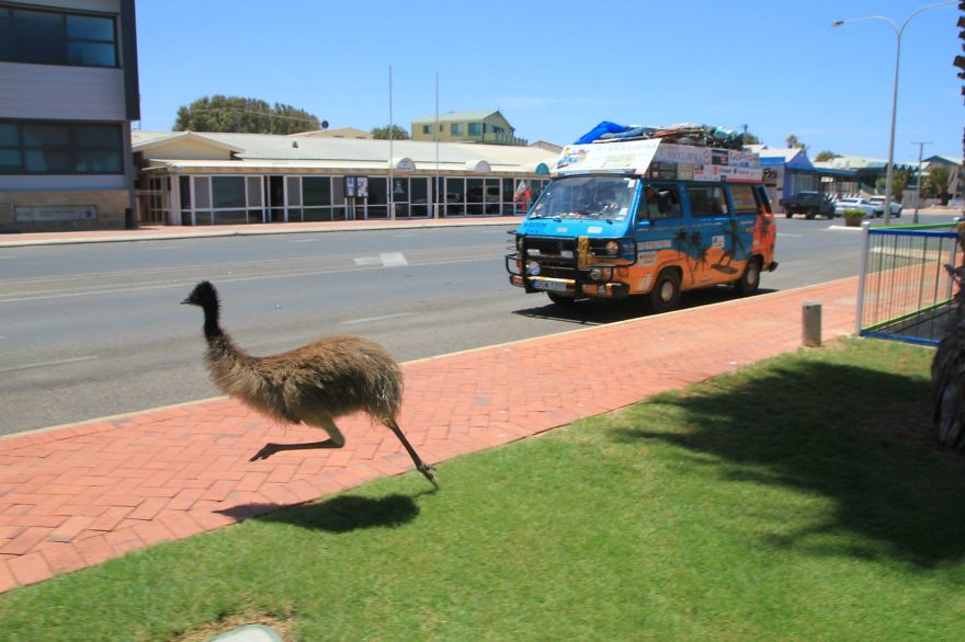 Like this wild emu, who is trying to race our car - We Visited Over 50 Countries With Our Van Spending Only $8 A Day