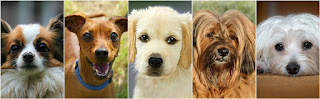 5 Fascinating Facts About Dogs You (Probably) Never Knew