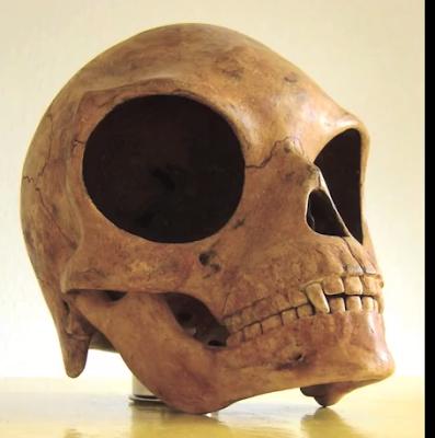 Περίεργο κρανίο βρέθηκε σε νησί της Δανίας