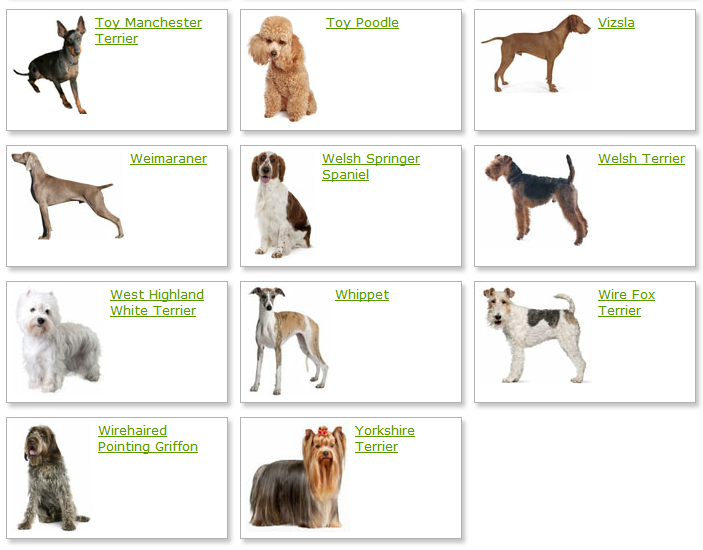 List Of Different Dog Breeds