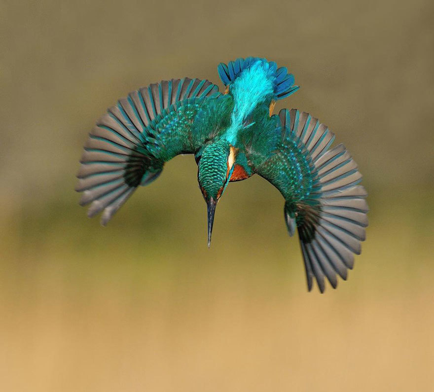 perfect shot of kingfisher catch the fish