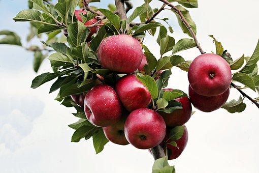 Apel Ternyata Ampuh Untuk Mencegah Penyakit Stroke