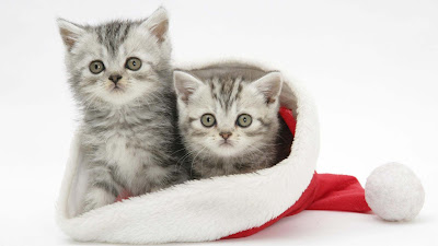 cristmas-wallpapers-of-cat-kittens