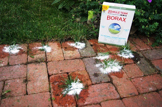 borax weed killer