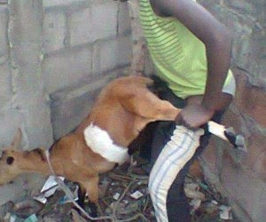 15-year-old-boy-caught-having-sex-with-goat