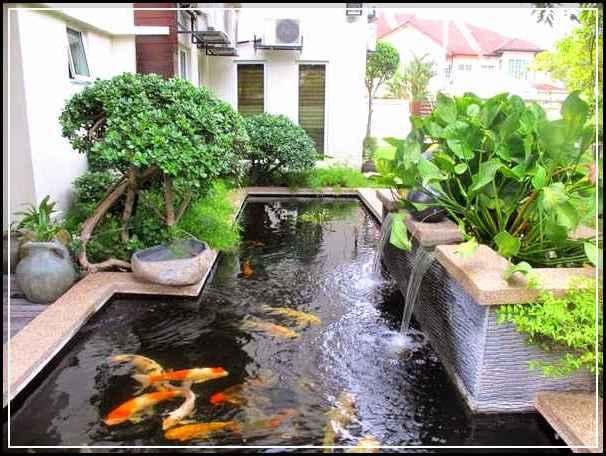 Cara membuat kolam ikan minimalis sederhana yang mudah for Peces para estanques de jardin