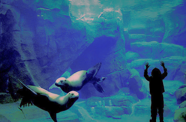 Best Aquariums in the USA: Alaska Sealife Center