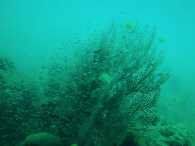photo of underwater diving Pattaya Corner