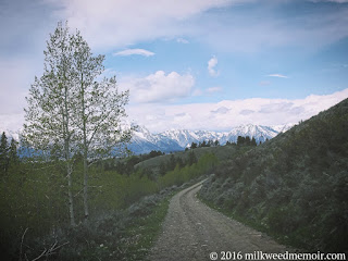 Looking at grand tetons from a forest road in bridger-teton national forest near moose, wyoming