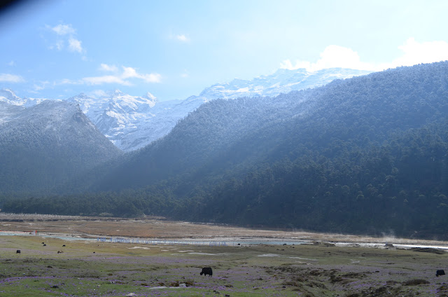 Yumthang Valley, North Sikkim