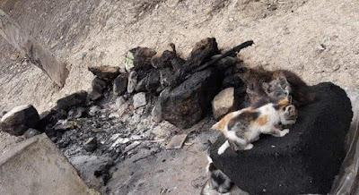 Maroc- L'auteur du crime de Safi qui a brûlé 40 chats poursuivi en justice