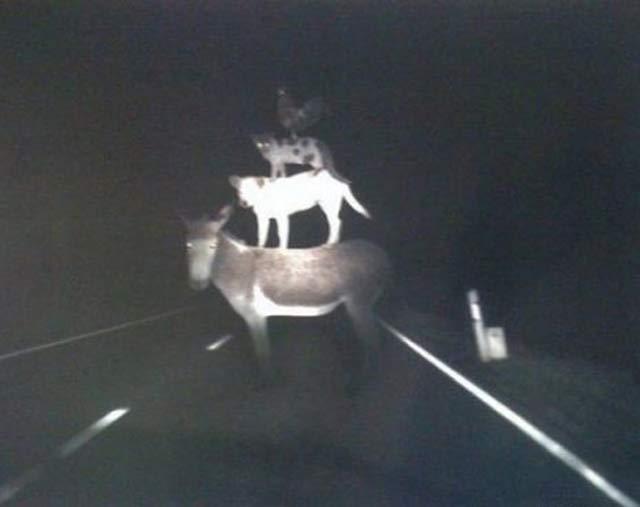 foto foto jadul paling menyeramkan dan bikin bulu kuduk merinding-4