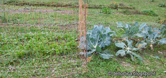 lavori nell'orto della fattoria didattica dell'ortica a Savigno rose confetture erbe per tisane ghirlande di fiori secchi e passeggiate in Appennino vicino Zocca