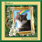 Beau Forever