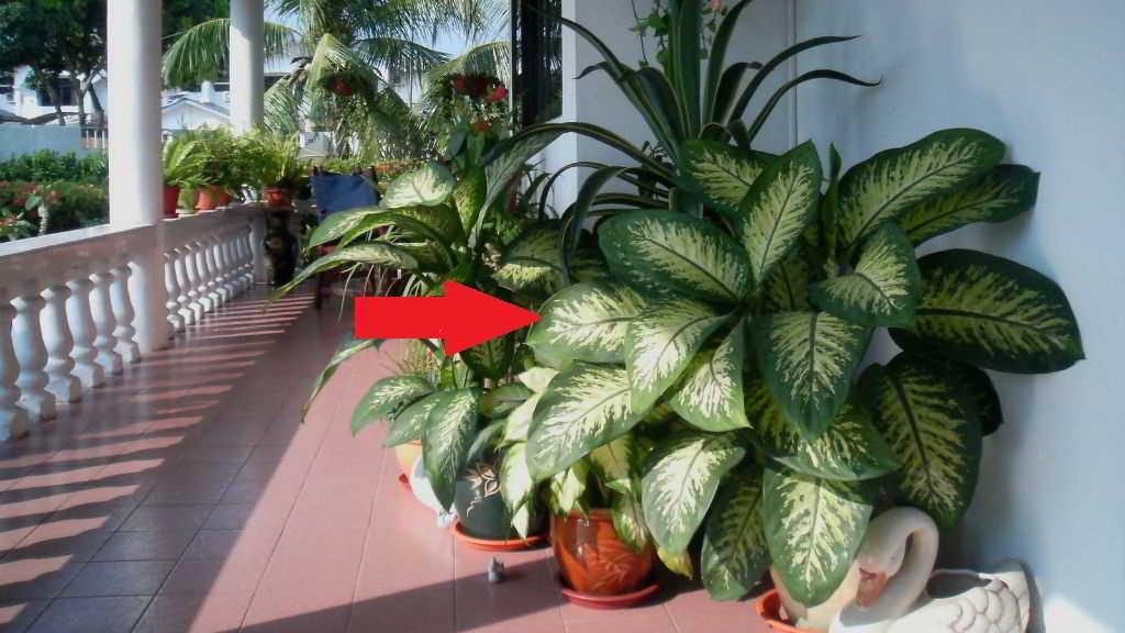 Esta planta que puede estar en tu casa matar a a un ni o - Plantas venenosas de interior ...