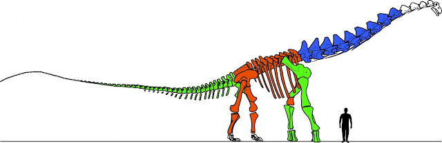Massive vertebrae sheds new light on Alamosaurus sanjuanensis