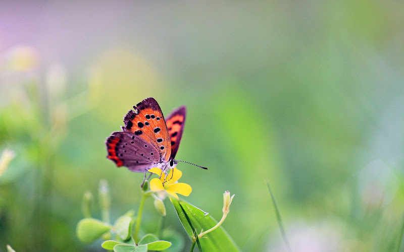 butterfly natural wallpapers peacock wallpapers free natural birds  title=