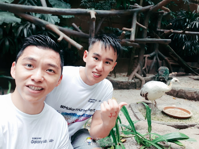 Take selfie photo with a bird at the aviary in Sunway Lagoon (With Live Focus Mode ON)