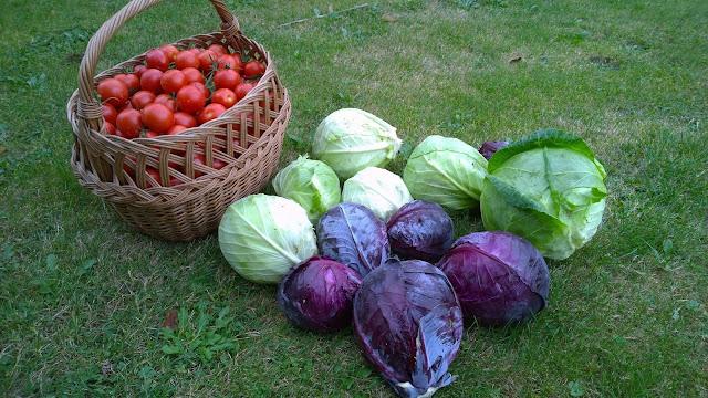 Tomaten, Weißkraut und Blaukraut (c) by Joachim WenkTomaten, Weißkraut und Blaukraut , Donator, Granat (c) by Joachim Wenk