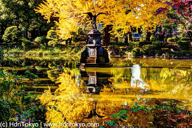 a crane fountain and a ginkgo tree with yellow leaves reflect on the water of the pond