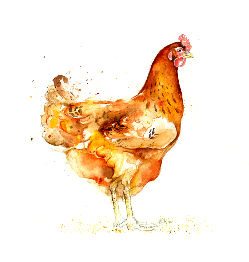 Amy Holliday Illustration : Chickens! - The Hens