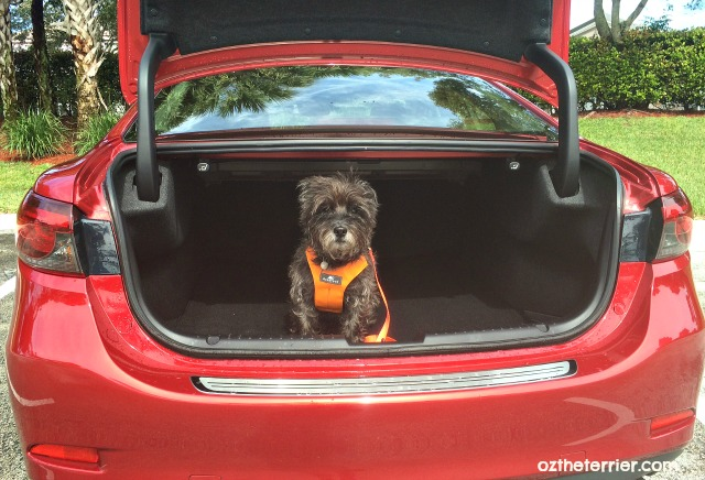 Oz the Terrier Mazda 6 Grand Touring has large trunk