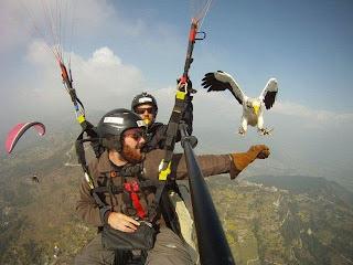 Gaviota y paracaidistas