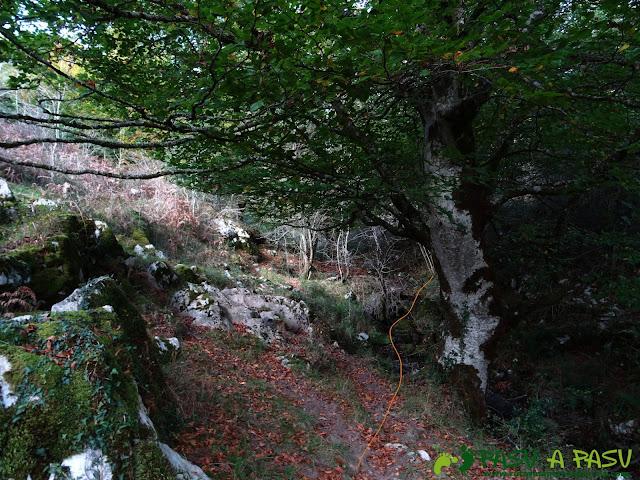Peña Sienra desde Covadonga: Camino a la Peña Sienra