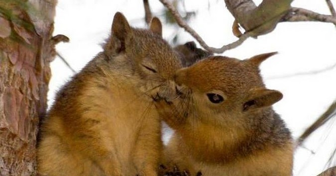 Squirrel Kissing Photo Animals Kissing Photos