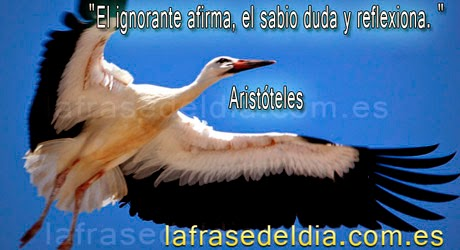 citas de aristoteles