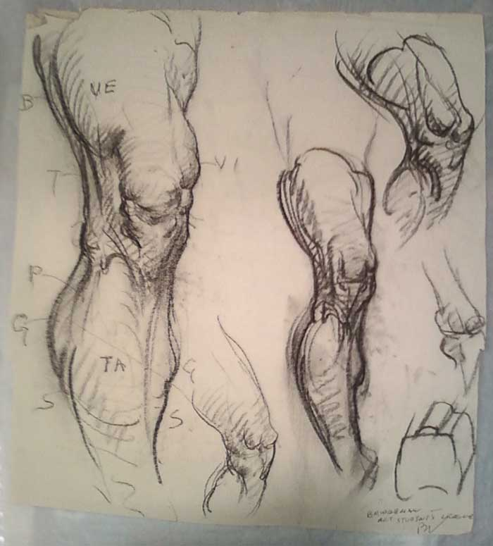 Bridgman Life Drawing Pdf