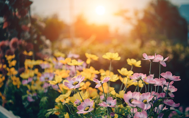 Sprucing Up Your Garden For Summer