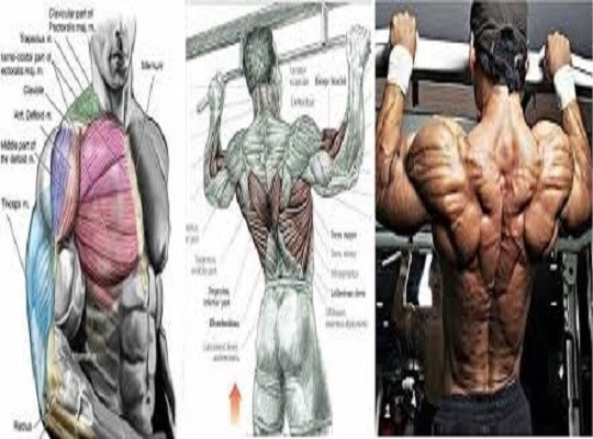 4 Training Techniques For Muscle Fullness & Roundness
