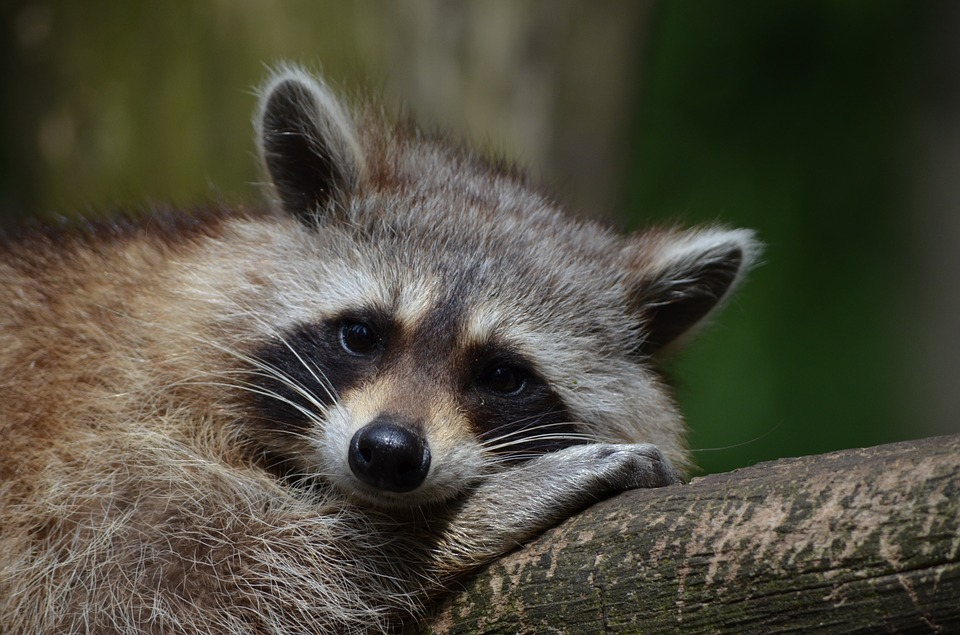 wild birds unlimited how to keep raccoons from your yard