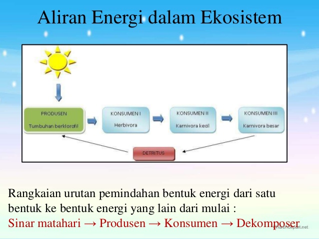 Temukan Pengertian Pengertian Aliran Energi Dalam Ekosistem