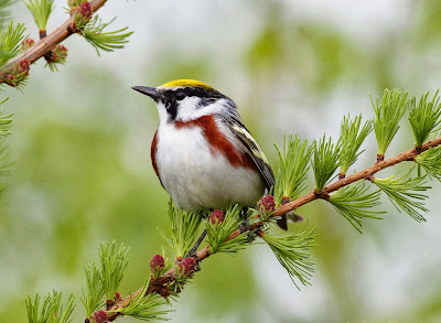 beautiful-sparrow-birds-wallpapers