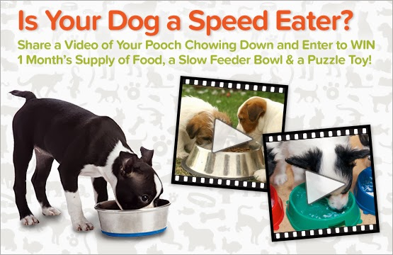 Is your dog a speed eater? video contest