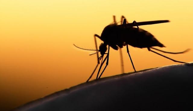 Αργολίδα: Τρίτος νεκρός από τον ιό του Δ. Νείλου - Σε σοβαρή κατάσταση ακόμα ένας ασθενής