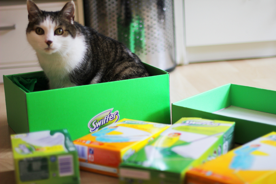 swiffer kooperation katze tierhaare blogger